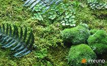 Giardino verticale da interno / in piante stabilizzate