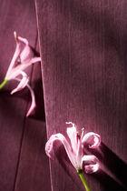 Parquet multistrato / da incollare / in amaranto / dipinto
