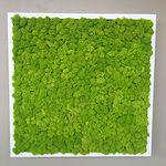parete vegetale stabilizzata / in pannelli modulari / naturale / da interno