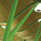 controsoffitto in bambù / in pannelli / ignifugo