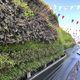 parete vegetale di piante viventi / naturale / da esterno / con struttura modulare