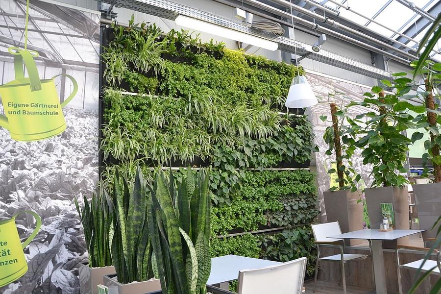Un giardino verticale in un ristorante tedesco.   vertiss