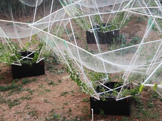 Azienda agricola/VRAP del cielo