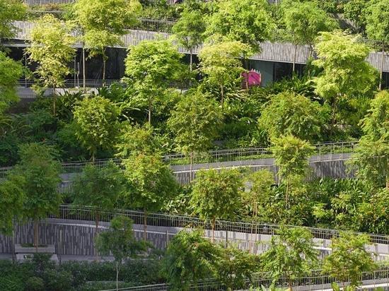 """serie e moltiplicare gli architetti per completare """"i terrazzi dell'oasi"""" bucolici a Singapore"""