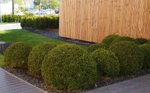 Design e manutenzione degli spazi verdi