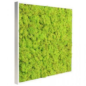 quadro vegetale stabilizzato / naturale / in fogliame / in lichene