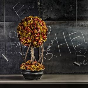 pianta ornamentale stabilizzata / bonsai