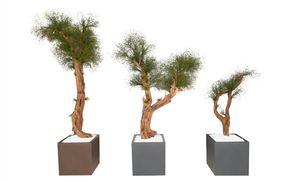 pianta ornamentale stabilizzata