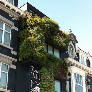 parete vegetale di piante viventi