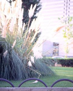 bordura da giardino