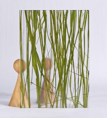 pannello decorativo acrilico / per interni / liscio / con inserto di piante naturali