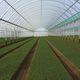 serra contract / da giardinaggio / a campata multipla / in plastica