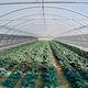 serra contract / da giardinaggio / a campata / con struttura in alluminio