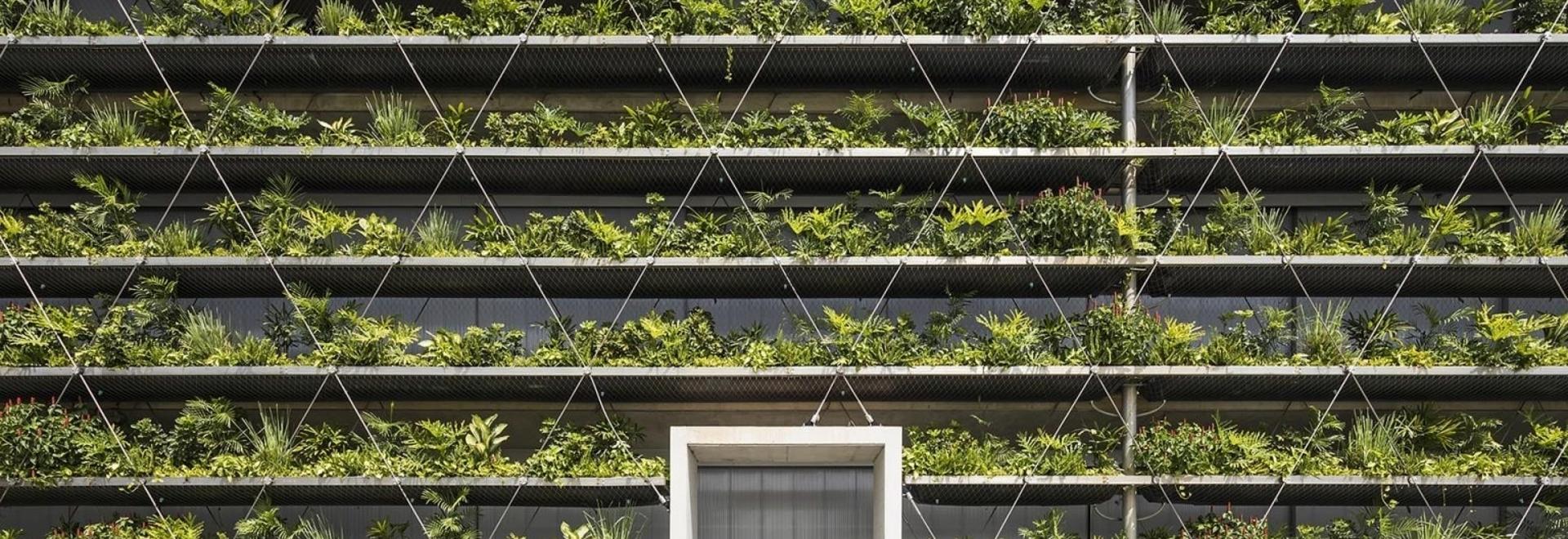Le file di piante si allineano all'esterno di questa fabbrica