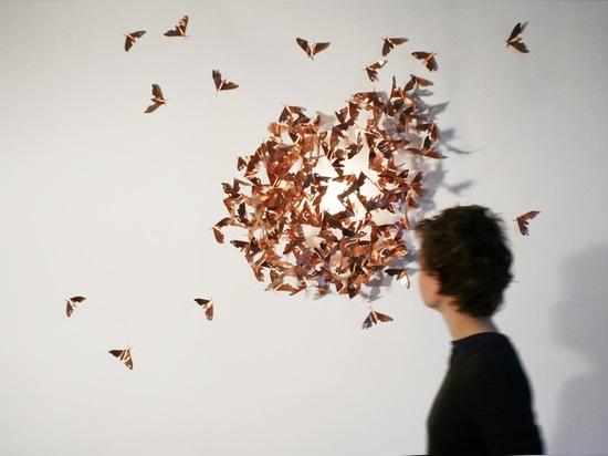 Lepidotteri limitati, © Mischer di immagine? Traxler