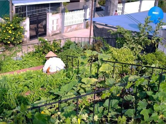 un giardino a gradini fornisce prodotti per i residenti della casa sul tetto rosso in vietnam