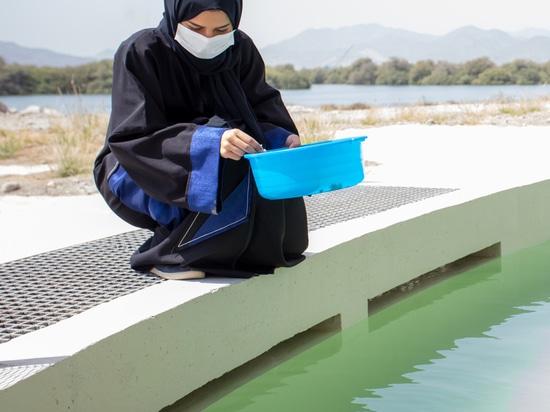 Hopkins Architects completa il santuario delle tartarughe e della fauna selvatica negli Emirati Arabi Uniti